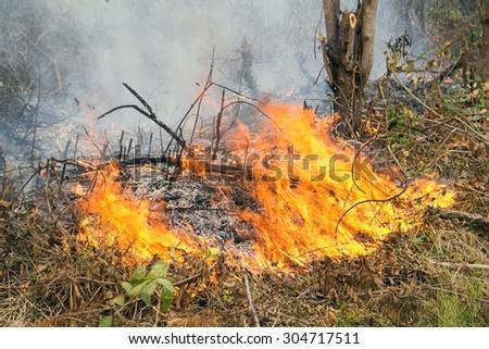 wildfire grass in Thailand. - stock photo