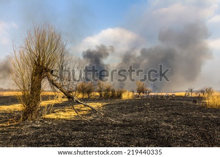 Wildfire in the field with burned dry grass and burned tree on a foreground - stock photo