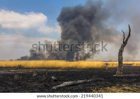 Wildfire in the field with dry grass with a burned trees on a foreground - stock photo