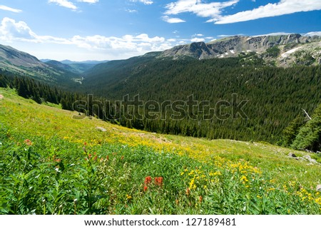 Wildflower Covered Mountain Landscape in Colorado