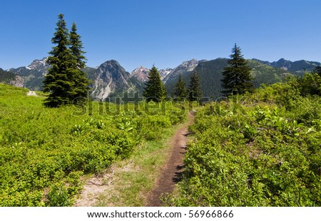 Wildflower field off of a hiking trail on a ski slope in western Washington on a beautiful sunny summer day. - stock photo