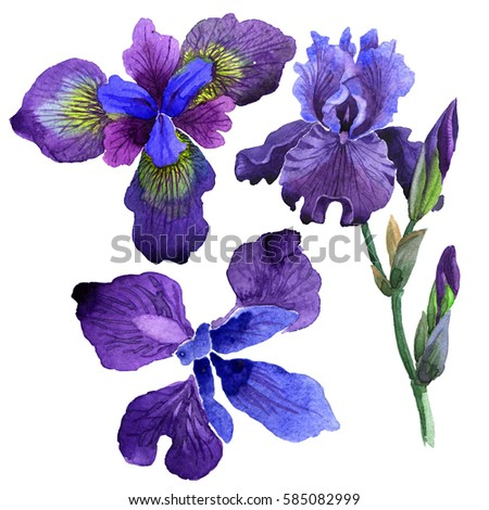 iris stock images, royaltyfree images  vectors  shutterstock, Beautiful flower