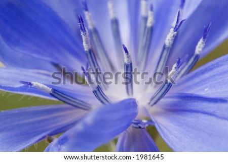 Wildflower Macro - stock photo