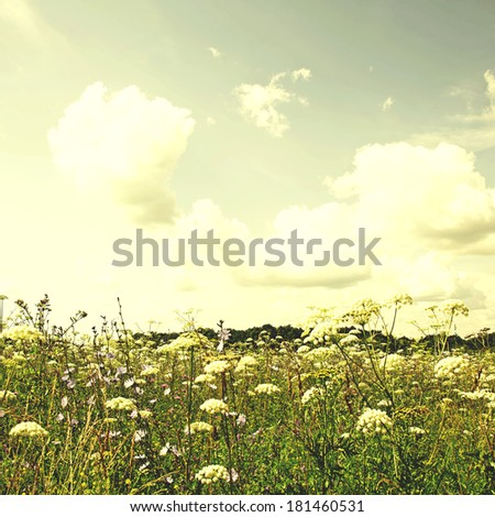 Wildflower meadow and blue sky, vintage retro style