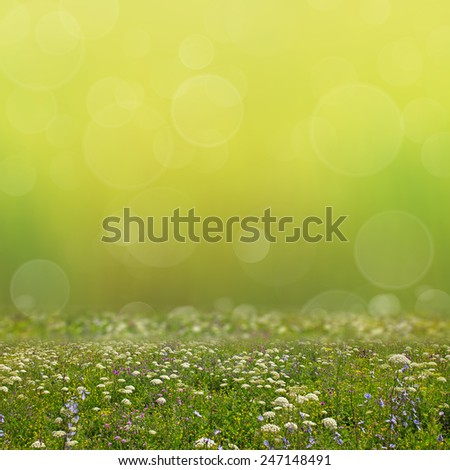 Wildflower meadow and green abstract bokeh lights background