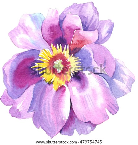 Wildflower Peony flower in a watercolor style isolated. Full name of the plant: peony. Aquarelle flower could be used for background, texture, pattern, frame or border.