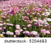 wildflower scattered around in Spring - stock photo