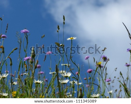 Wildflowers - stock photo