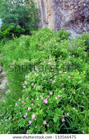 Wildflowers along a cliff in Custer State Park of South Dakota - stock photo