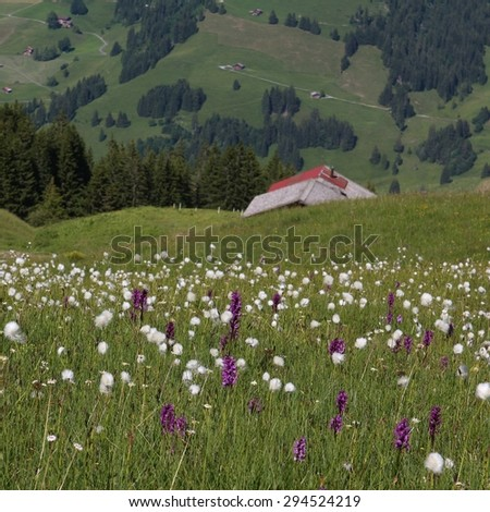 Wildflowers and green farmland - stock photo