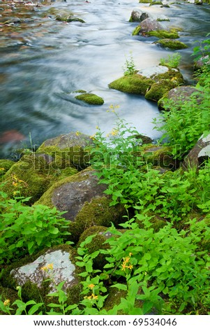 Wildflowers and moss covered rocks line a rushing mountain stream in Montana. - stock photo