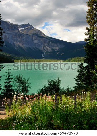 Wildflowers and Mountains in the Canadian Rockies