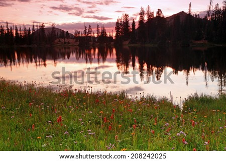 Wildflowers at sunset in the Uinta Mountains, Utah, USA. - stock photo