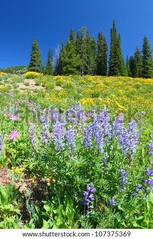 Wildflowers bloom under a gorgeous blue summer sky in Yellowstone National Park in Wyoming - stock photo