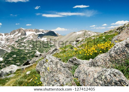 Wildflowers blooming in a beautiful Colorado Rocky Mountain Summer Landscape - stock photo