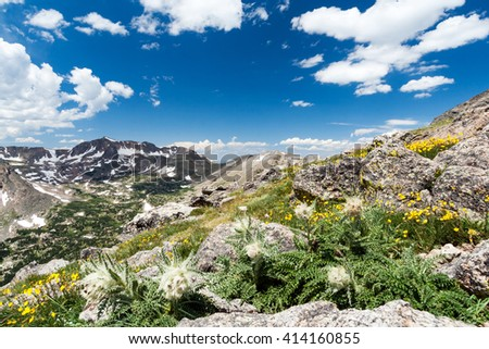 Wildflowers blooming in wilderness landscape of Colorado Rocky Mountains - stock photo
