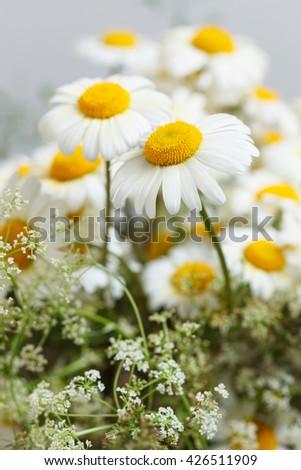 Wildflowers daisy bouquet. low aperture shot, focus on single daisy - stock photo