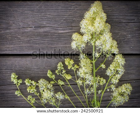Wildflowers fluffy yellow on the background of the old wooden planks - stock photo