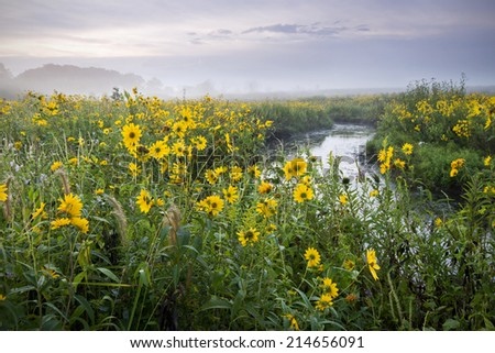 Wildflowers glow in the warm light of sunrise on a foggy morning, Springbrook Prairie Nature Preserve, DuPage County, Illinois. - stock photo