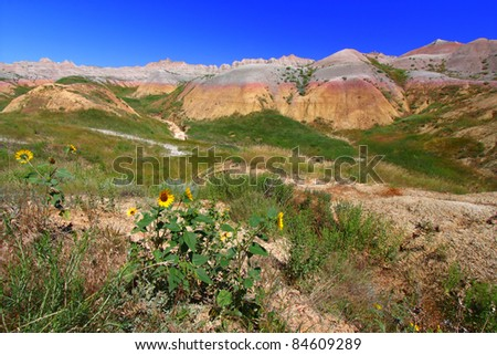 Wildflowers grow against a backdrop of colorful mountains in the Badlands National Park of South Dakota - stock photo
