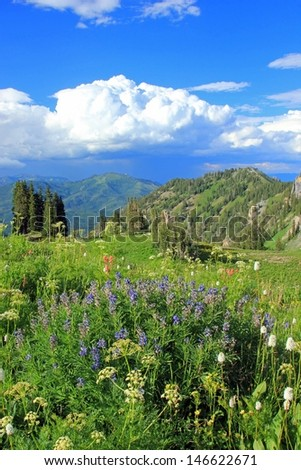 Wildflowers in a meadow with thunderheads building in the background, Utah, USA. - stock photo