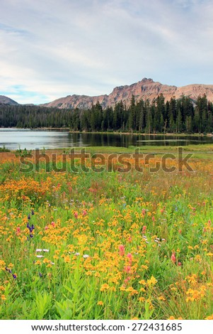 Wildflowers in a mountain meadow, Utah, USA. - stock photo
