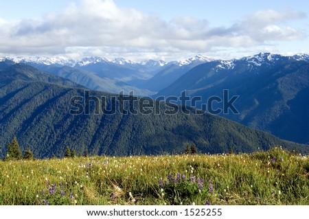 Wildflowers in July in Olympic national park, Hurricane ridge - stock photo