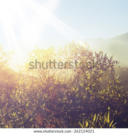 Wildflowers in meadow during sunrise - stock photo