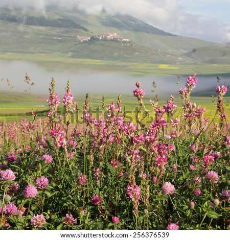 wildflowers in morning foggy scene, Castelluccio di Norcia village at the background,Italy, Europe - stock photo