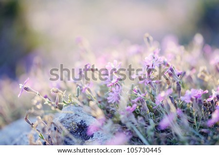 Wildflowers, meadow, sunset, toned image. - stock photo