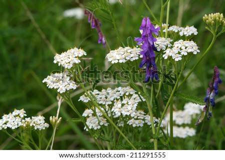Wildflowers on a summer meadow - stock photo