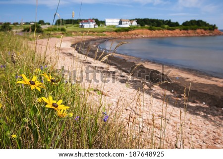 Wildflowers on Prince Edward Island coast near village of North Rustico in Green Gables Shore,  PEI, Canada. - stock photo