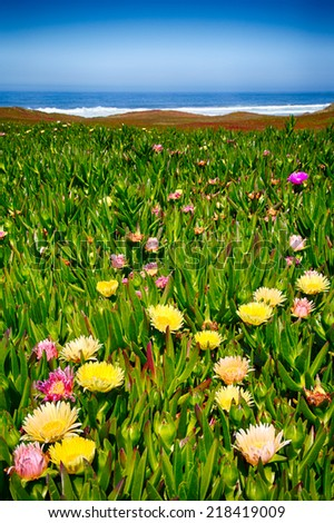 Wildflowers on the beach in Point Reyes National Seashore. California - stock photo