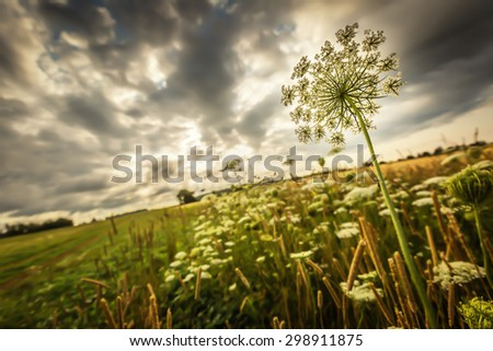Wildflowers  on the edge of farm field and under stormy skies. - stock photo