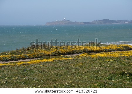 Wildflowers on the Pacific Coast, California - stock photo