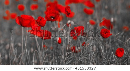 Wildflowers poppies - stock photo