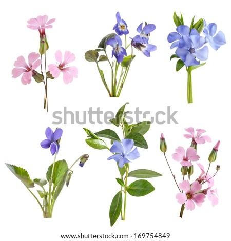 Wildflowers set isolated on white background - stock photo