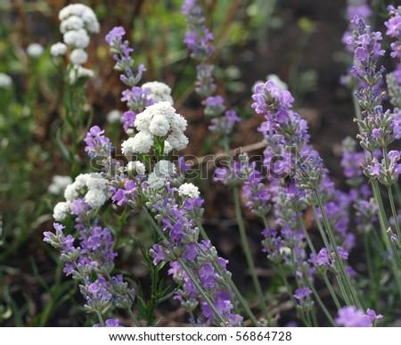 Wildflowers. Shallow DOF. - stock photo
