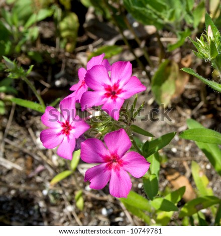 Wildflowers sprouting in the Spring - stock photo