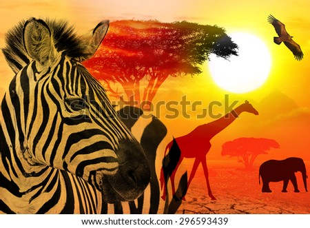 Wildlife and beautiful sunset in the Serengeti Park. Tanzania. Africa. Africa wildlife and nature concept. Heat, drought and  global warming - stock photo