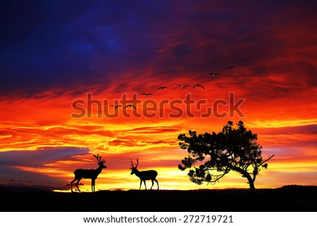 Wildlife and Nature - stock photo