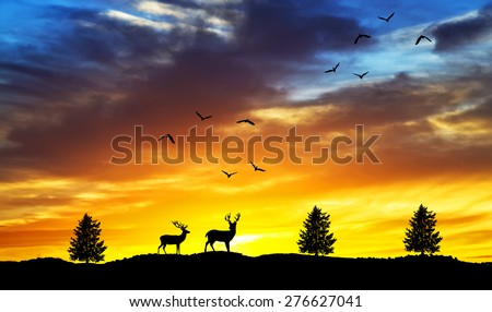 wildlife and nature of colors - stock photo