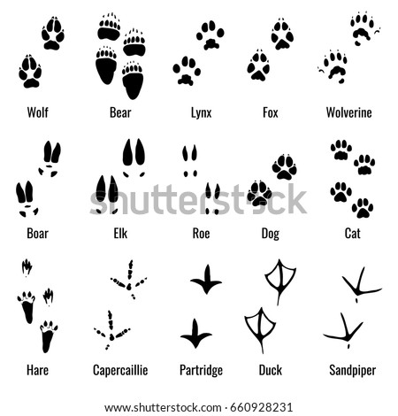 Wolverine animal furthermore Var rel additionally Animal Tracks Clipart additionally Deer tracks decal together with Chicken Tracks Clip Art. on deer tracks