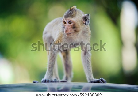 Wildlife cheeky monkey 6