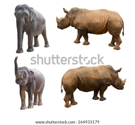 Wildlife, elephants and rhinos - stock photo