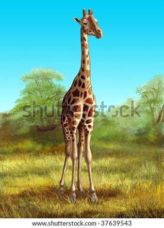 Wildlife: giraffe in its native african environment. Digital illustration. - stock photo