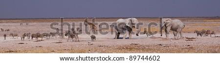 Wildlife in Etosha National Park, Namibia - stock photo