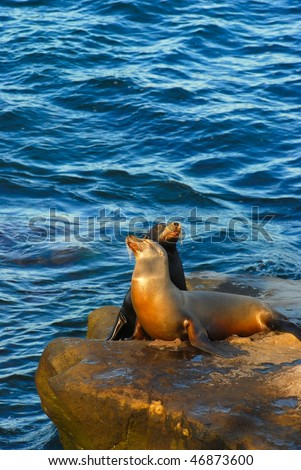 Wildlife in San Diego - stock photo