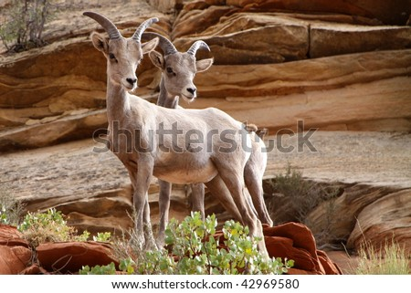 wildlife in Zion National Park - stock photo