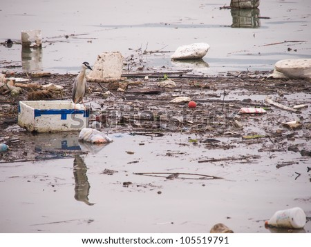 Wildlife On A Polluted River - stock photo
